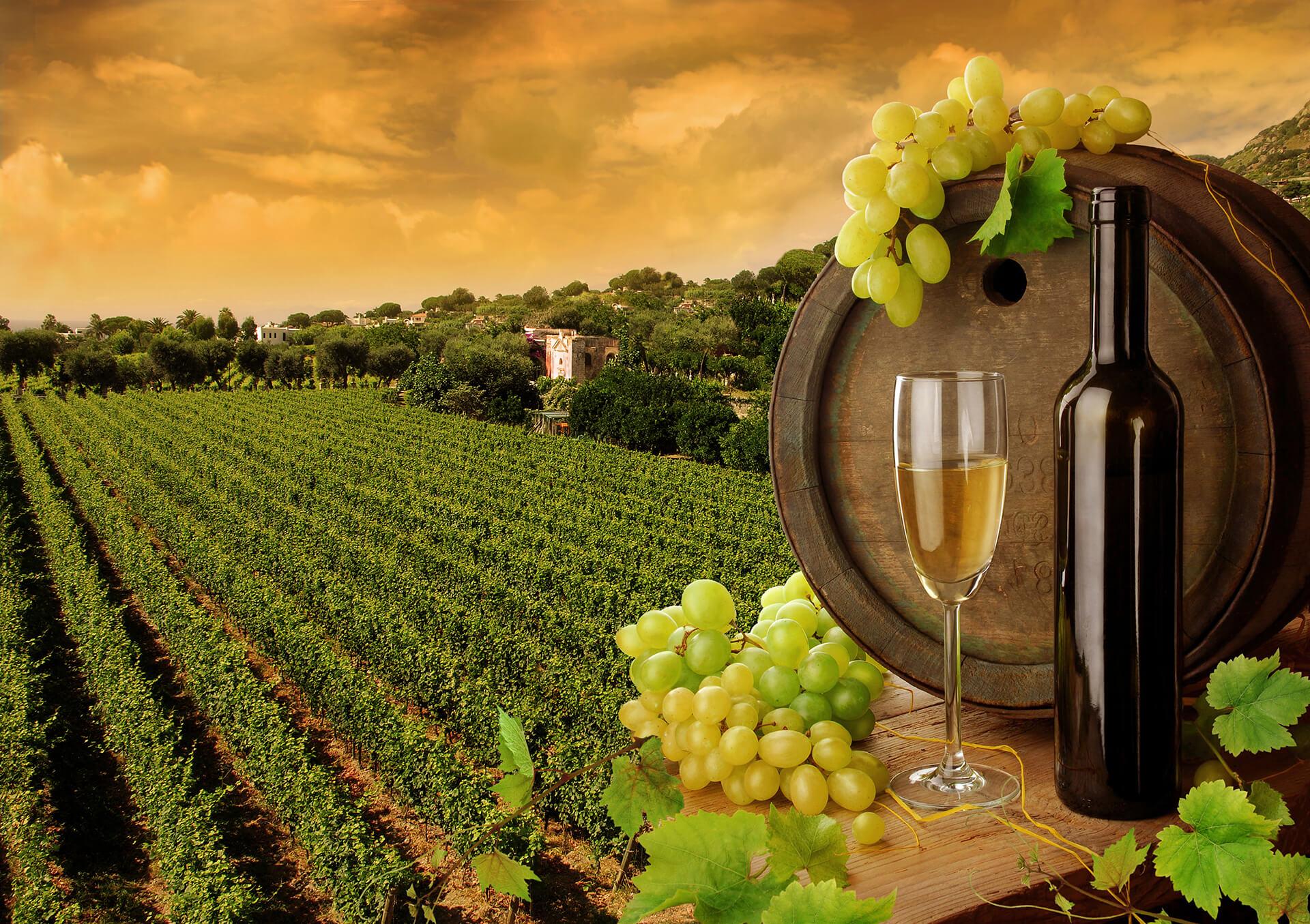 San Diego Winery Tours